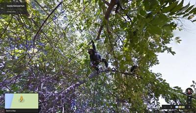 【数据测试】谷歌街景带你领略坦桑尼亚的贡贝国家公园
