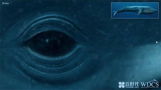 【数据测试】在线观看震撼的深海蓝鲸,世界上最大的动物!