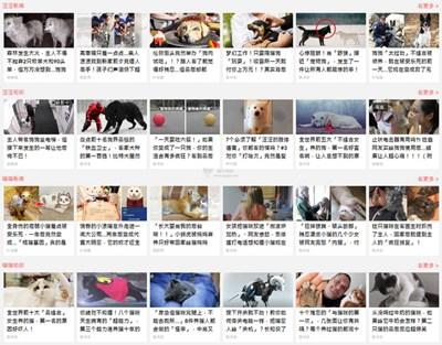 【经典网站】iPetGroup|台湾《就是愛寵物 》社区