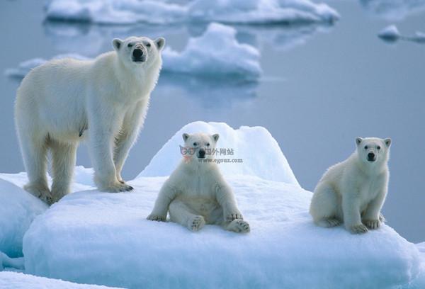 【经典网站】PBI:北极熊国际协会