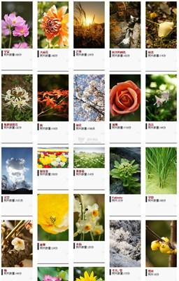 【素材网站】ImgStyle|免费搞像素植物图库