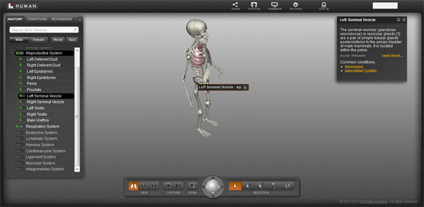 【数据测试】BioDigita Human- 在线3D人体结构模型【云软件】