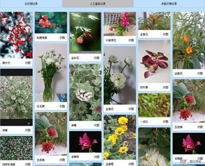 【工具类】传图识花|在线花卉识别工具