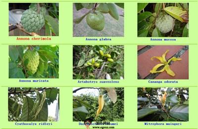 【经典网站】NatureLoveYou:新加坡植物数据库