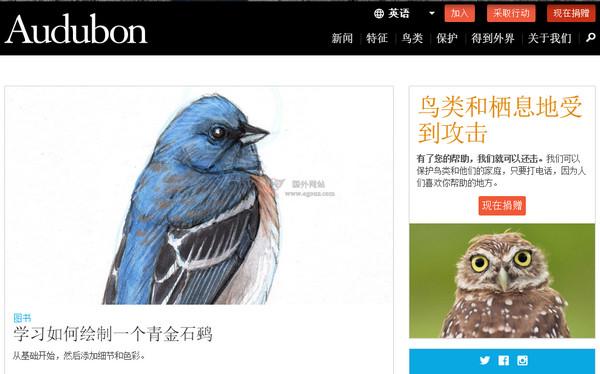 【经典网站】Audubon:奥杜邦鸟类学会