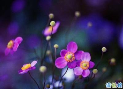 放弃爱情放弃你的伤感句子 对爱情很无奈的说说