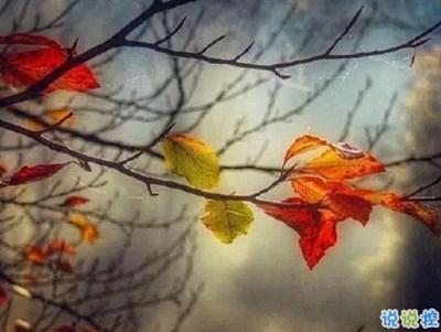 2021年优美说说-描写秋天的句子优美带图片 秋天到了微信心情说说