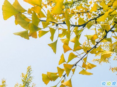 朋友圈说说-赏银杏的朋友圈说说带图片 有关银杏的唯美说说配图