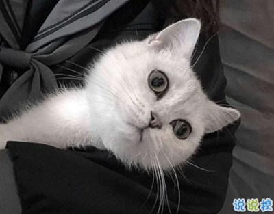 2021年朋友圈说说-微信朋友圈晒宠物说说带图片 宠物说说可爱配图