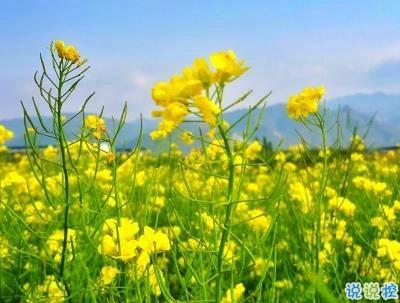 关于文艺的句子-春天优美文艺说说带图片 值得收藏的春季文案