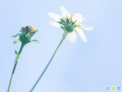 春暖花开的朋友圈说说 春天唯美说说短句