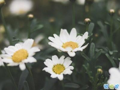 唯美说说心情句子带图片 既然生便与夏花一样的绚烂