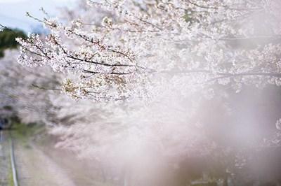 一瞬间能击中你的唯美句子 倾我一生一世换取岁月静好